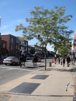 cavalerie de la police de montréal