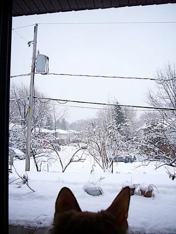 chat quebecois en hiver