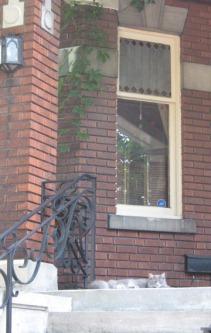 chat de montréal