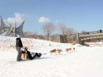 promenade chiens fete des neiges