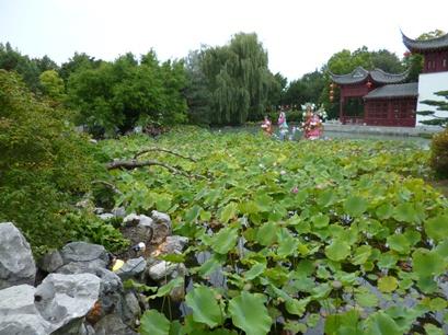 plantes pavillon chine