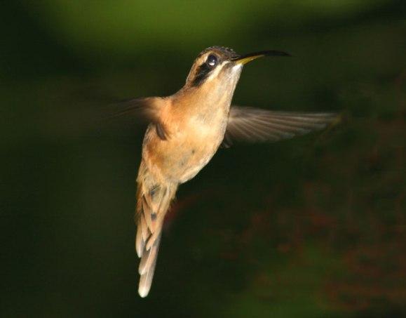 http://grandquebec.com/upl-files/colibri.jpg