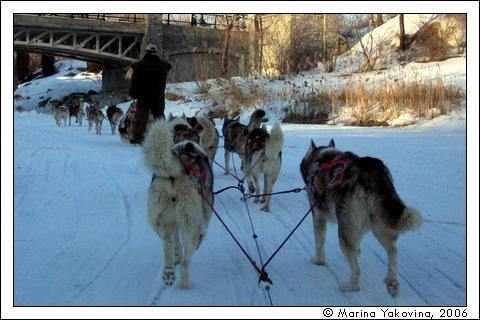 Traîneaux à chiens dans le Nord-du-Québec