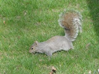 ecureuil chercheur
