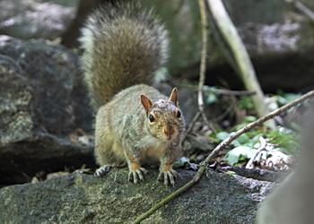 ecureuil du parc