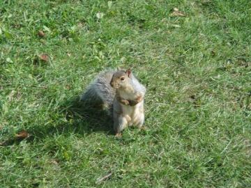 ecureuil en vedette
