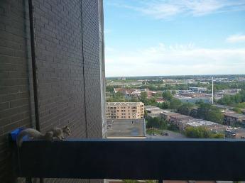 écureuil en hauteur