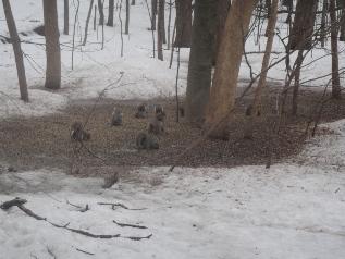 ecureuils en hiver