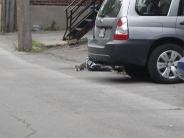 ecureuils monnaie courante