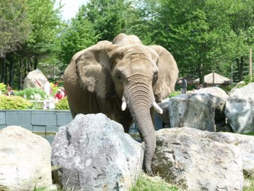 elephant granby