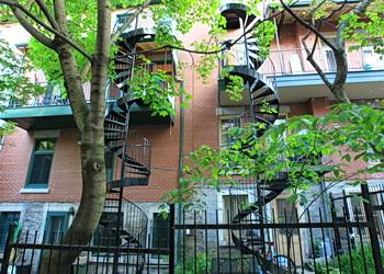 escalier girafe