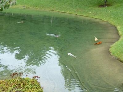 Jardin Japonais Voyage Travers Le Qu Bec