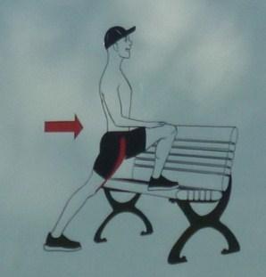 flechisseur de la hanche