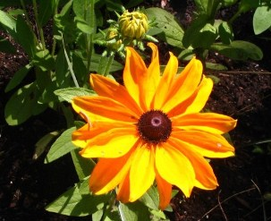 fleur_jaune