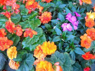 fleurs allergies