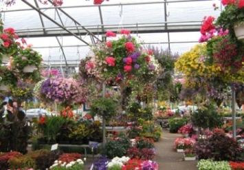 fleurs intérieur marché Atwater