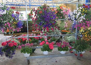 fleurs du marché du vieux port de québec