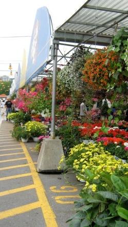 fleurs du marché