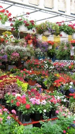 fleurs sherbrooke