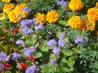 fleurs rue vinet