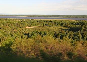 forêt de charlevoix