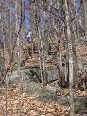 forêt du mont st grégoire