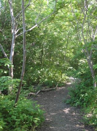 forêt du sablon