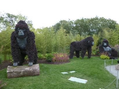 gorilas en péril