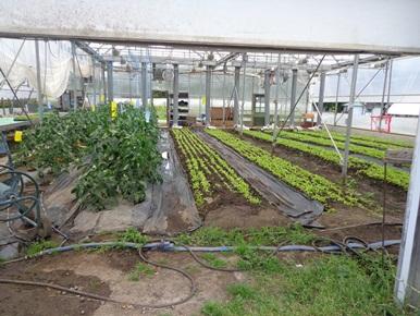 jardin potager à laval