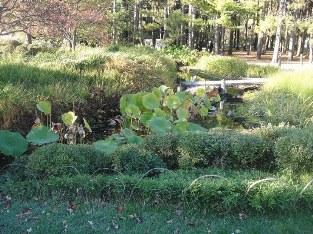 étang du jardin japonais