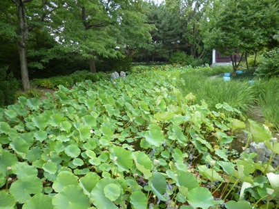 jardin de chine plantes