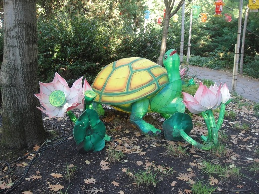 tortue chinoise