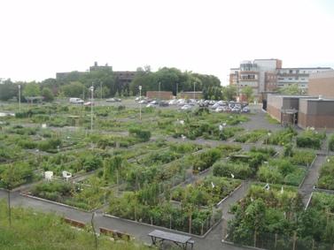 Jardin communautaire voyage travers le qu bec for Jardin quebec
