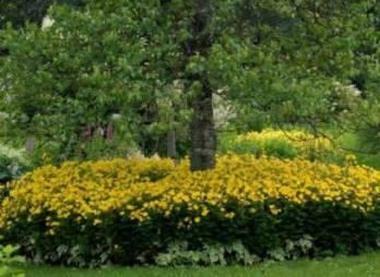 jardins vivaces de fernand