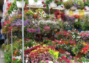 marché atwater, fleurs