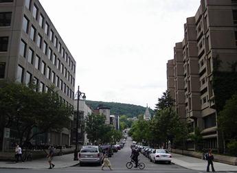 rue mctavish