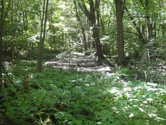 milieu humides boise domaine st paul