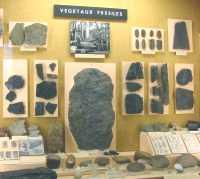 musée géologique rené bureau