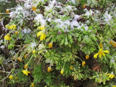 neige à jérusalem
