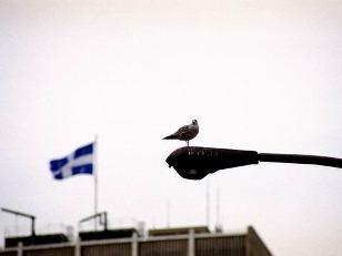 oiseau du québec