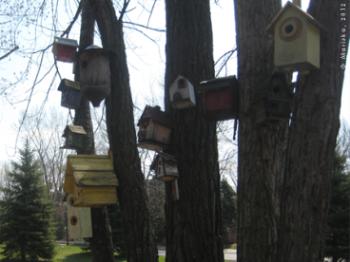 nids d'oiseaux