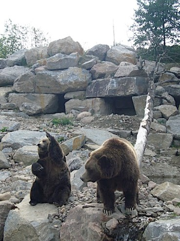 ours de saint felicien