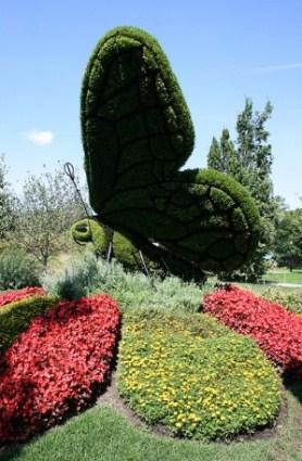 papillon expo