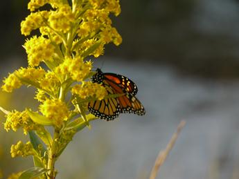 papillon en octobre