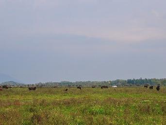 parc des bisons