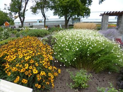 Jardin des plantes vivaces voyage travers le qu bec for Plantes vivaces rustiques