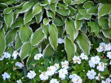 plantes medecinales et toxiques