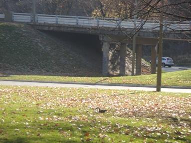 pont du chemin remembrance