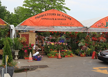 producteurs des fleurs