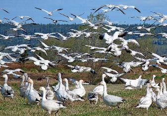 reserve de faune de baie isle verte